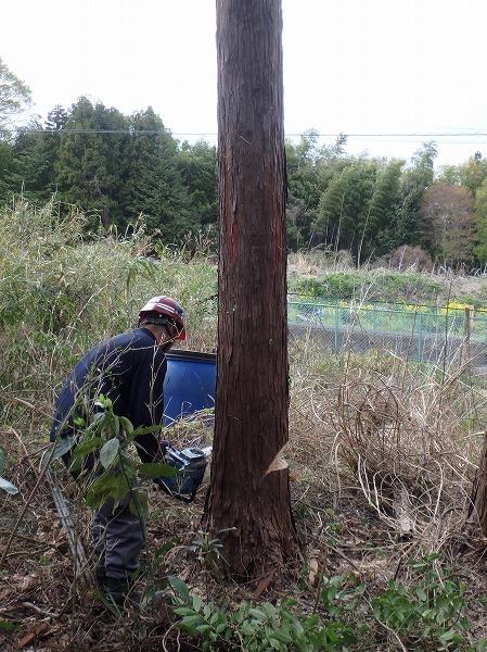 愛甲郡の木の伐採